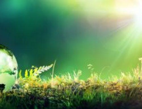 Geef groen voor een betere wereld… geen woorden maar daden!