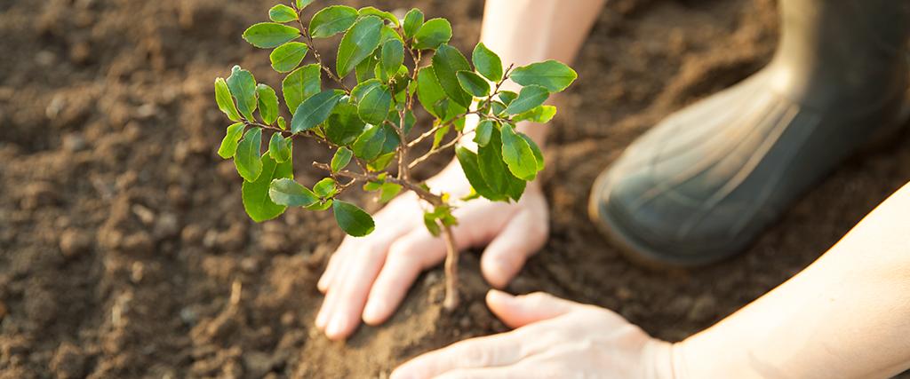 Planten van bomen voor beter milieu